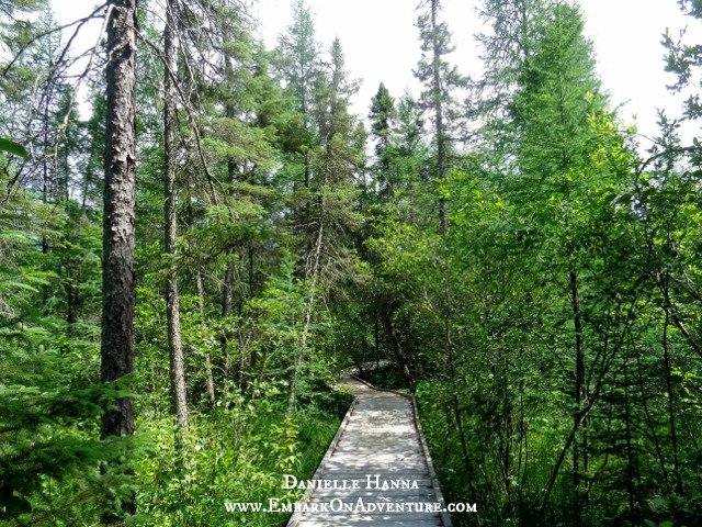 The boardwalk Bog Walk at Lake Bemidji State Park
